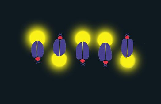 Firefly row