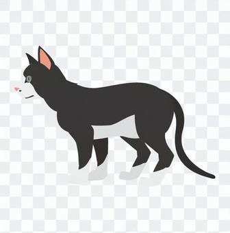 Cat - Tuxedo cat