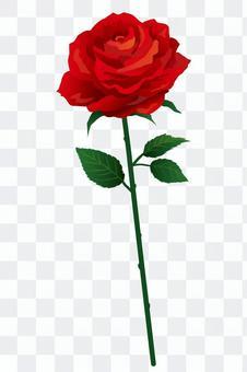 紅玫瑰1輪