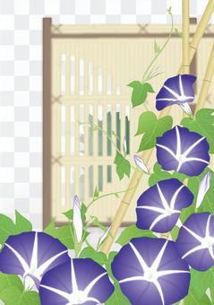 在竹垣_紫色的牽牛花