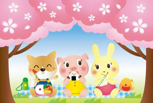 Cherry-blossom animated illustration
