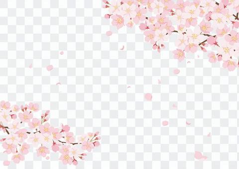櫻花背景3