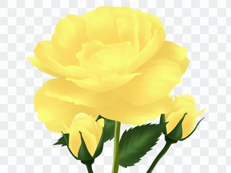 黄色いバラ・1