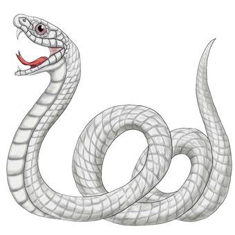 白蛇或大蛇,蛇神旁