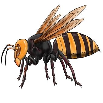 在巨型大黃蜂或巨型蜜蜂怪物旁邊