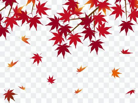 日本和平材料秋葉楓