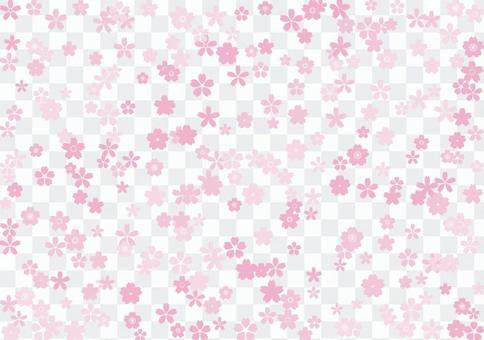 Cherry blossoms 6b