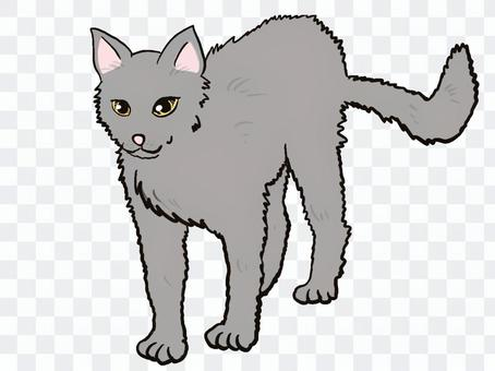 貓灰色灰色灰色黃金眼