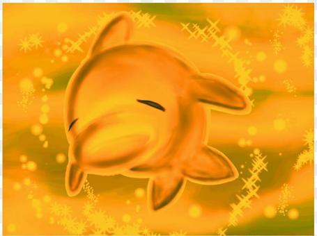晚上海水海豚