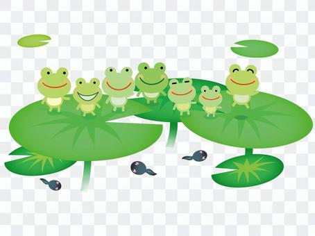 Frog 02