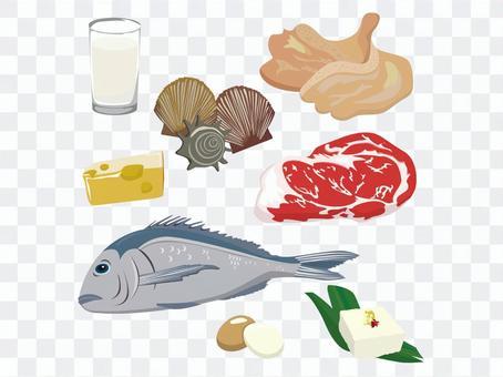 與很多蛋白質的食物成分