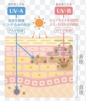 肌の構造/皮膚の構造_日焼けの仕組み
