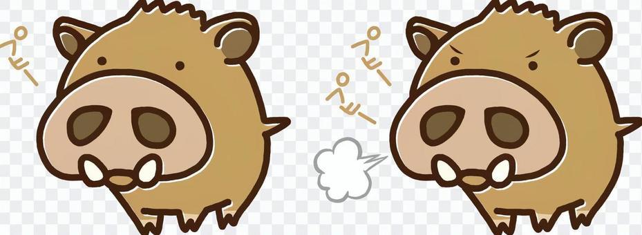 boar!