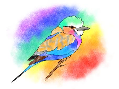 丁香花滾子彩虹色的鳥