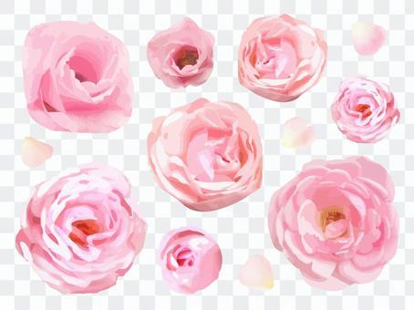 Pink Flower Summary