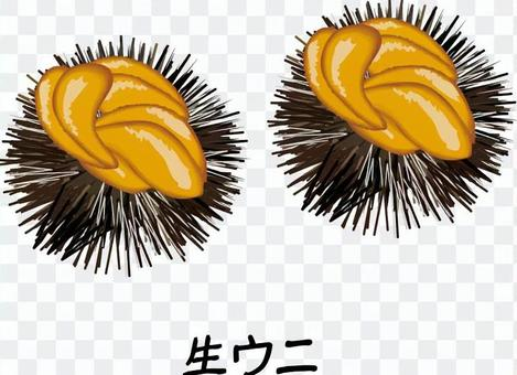 海膽生海膽生魚片殼刺
