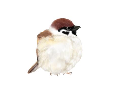 浮腫麻雀 冬麻雀第二隻鳥