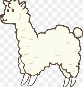 羊駝可愛的動物非洲