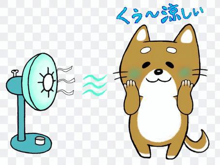 Kotaro Mameshiba_Kuu ~ Cool !!