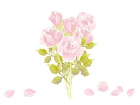 用水彩畫的粉紅玫瑰