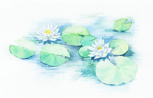 白蓮教花畫與水彩