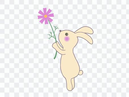コスモスを持つウサギのイラスト