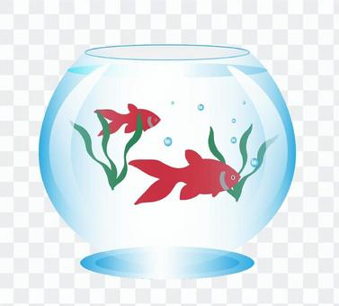 金魚的插圖