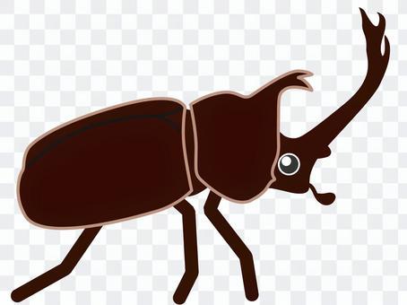 甲蟲(彩色)