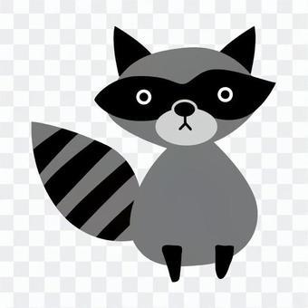 Gray's Raccoon