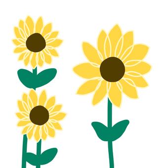 向日葵與莖的插圖