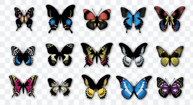 蝴蝶插圖集