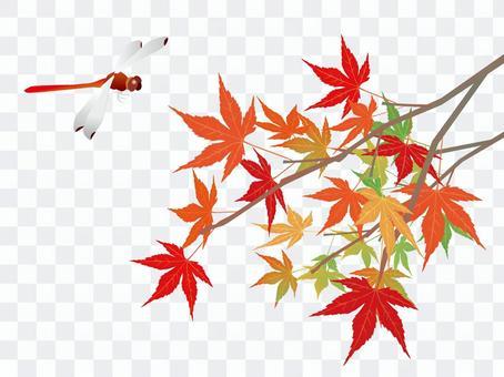 秋天的落葉和紅蜻蜓
