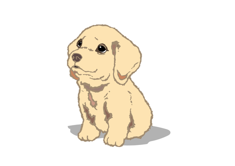 Wanko puppy