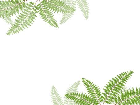 Fern plant frame