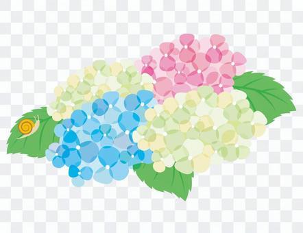 繡球花和蝸牛 2