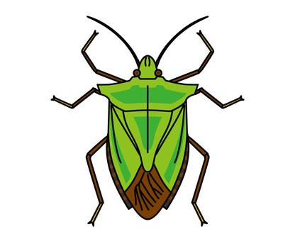 Stink bug-green