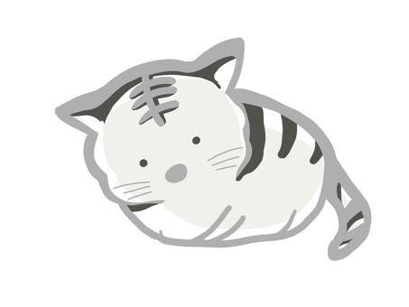 這是一隻貓