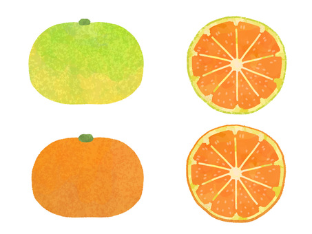 Cross-section set of early-maturing oranges and ripe oranges