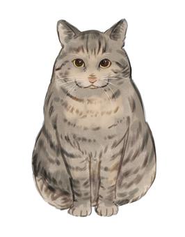 Cat_Sabatra