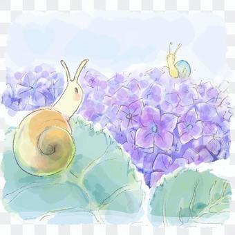 梅雨の紫陽花とカタツムリ