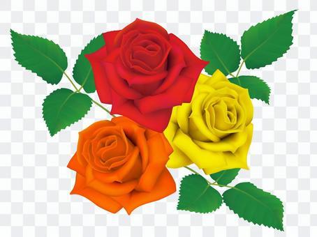 玫瑰3輪_ 3色