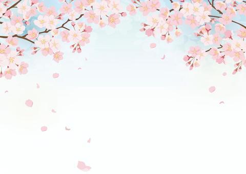Sakura background 2