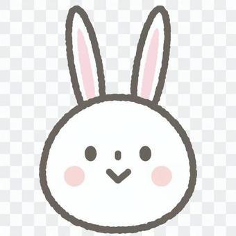 可愛的動物兔
