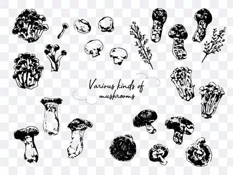 各種蘑菇插圖