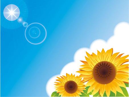藍天和太陽和向日葵