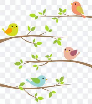 小鳥先生12
