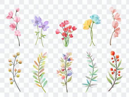 多彩的植物收藏