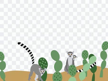 狼狐猴和仙人掌