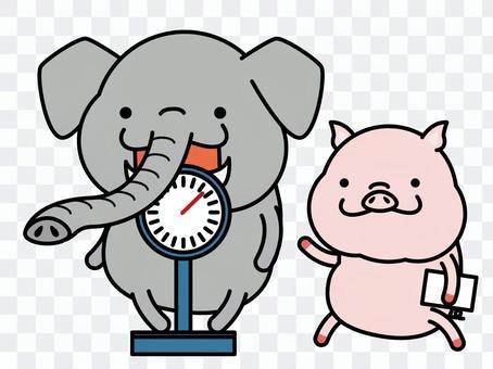 大象體重測量