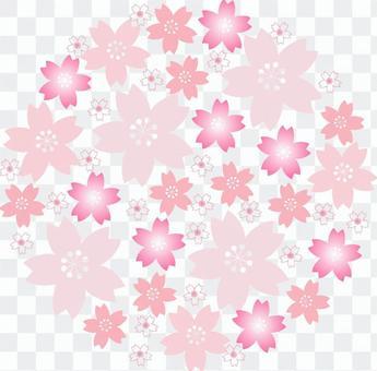 An assortment of cherry blossoms